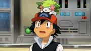 P11 Ash con Shaymin encima de su gorra