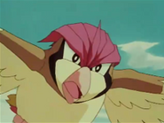 EP003 Pidgeotto volando