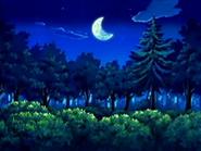 EP433 Bosque en la noche