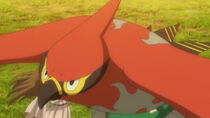 EE18 Talonflame
