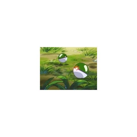 Safari Balls en el anime.