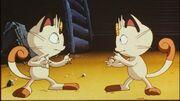P01 Meowth y su clon