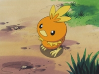 EP310 Torchic (2)