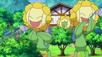 Sunfloras de Lulu