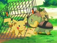 EP474 Turtwig liberando a Pikachu