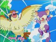 EP470 Pidgey y Rattata atrapados en la tela de araña