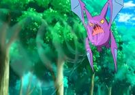 Crobat de Brock usando Supersonico