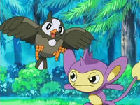 EP471 Starly vs Aipom de Ash
