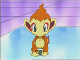 EP470 Chimchar en el laboratorio