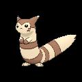 Furret XY
