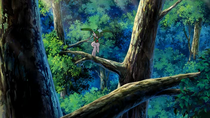 P10 Gallade entre los árboles