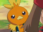 EP278 Torchic triste