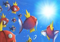 Evento Magikarp Pokémon Center Hiroshima