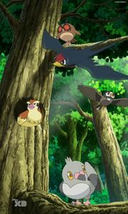 EP804 Pájaros Pokémon
