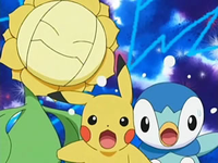 EP505 Sunflora, Pikachu y Piplup