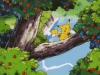 EP039 Pikachu cogiendo una manzana