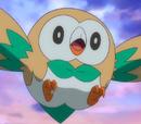 Rowlet de Ash