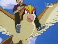 EP105 Pidgeot volando