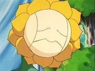 EP137 Sunflora triste