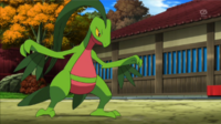 EP879 Grovyle de Scottie