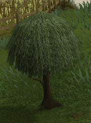Willowtree2