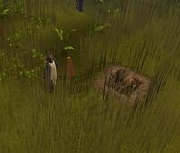 Atrapando un Broav