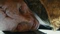 Snoke Corpse.png