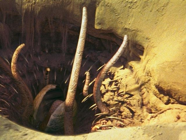 Sarlacc | Star Wars Wiki | FANDOM powered by Wikia