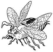 Piranha beetle