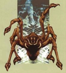 RearingSpider