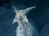Vulptex