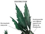 Enjambre Destructor