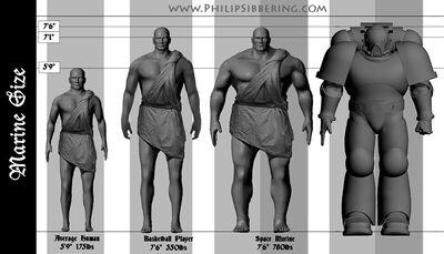 Anatomía marine espacial 40k comparación humano normal