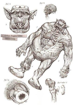 Orko fisiología wikihammer