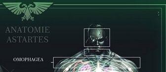 Marines Anatomia Astartes servoarmadura-crop