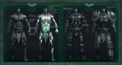 Anatomía Astartes servoarmadura