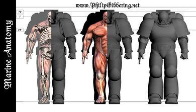 Anatomía marine