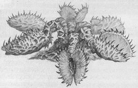 Venus atrapahombres planta warhammer