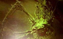 300px-Hierophant close-up