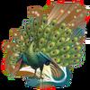 Kingly Peacock (XIV)