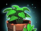 Herbología