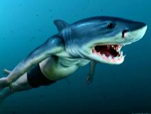Viktor Krum tiburon
