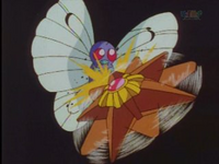 EP007 Butterfree VS Staryu