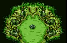Bosque Transform