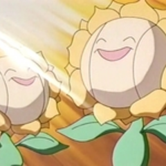 EP137 Sunflora (6).png
