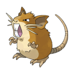 Raticate