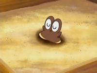 EP513 Hippopotas enterrado en arena hasta los ojos