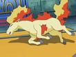 EP562 Ponyta derrotado