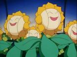 EP137 Sunfloras de sonrisa