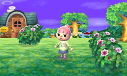 Animal Crossing Enciclopedia
